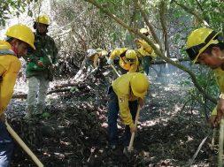 Chiapas fue el sexto estado con más incendios en 2019
