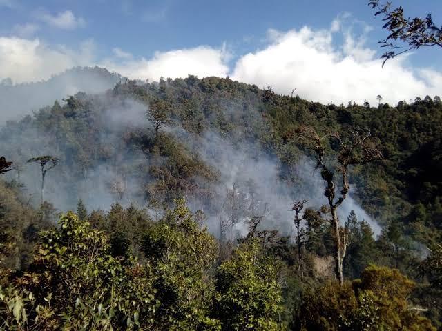 En plena pandemia disminuyen incendios forestales en Chiapas / En La Mira