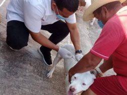 Tapachula vacunación antirrabica