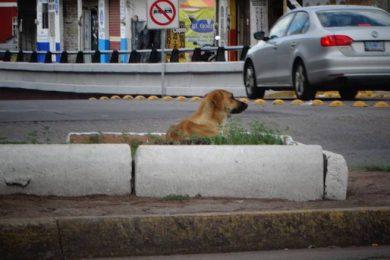 SANCIONES A MALTRATO ANIMAL