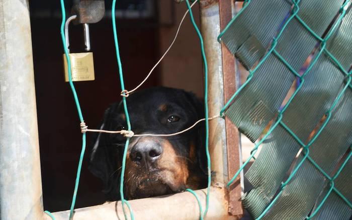 ¿Para cuándo la penalización del maltrato a animales domésticos? / En la Mira