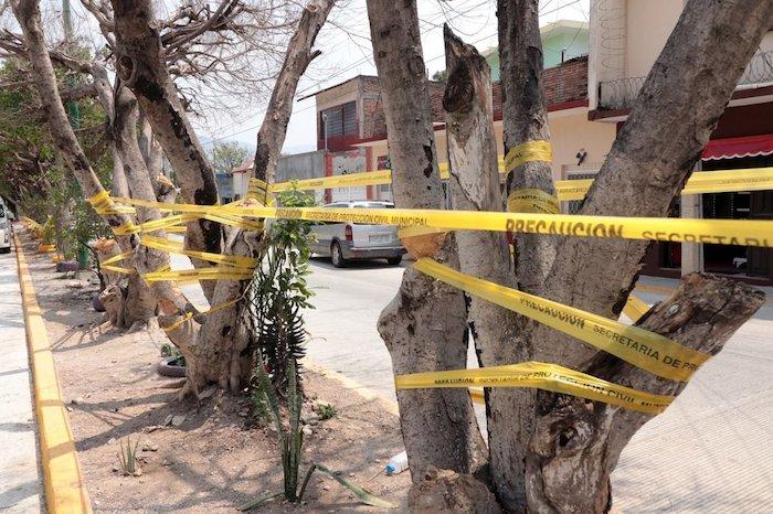 24 árboles secos y en riesgo de caerse serán retirados en Tuxtla