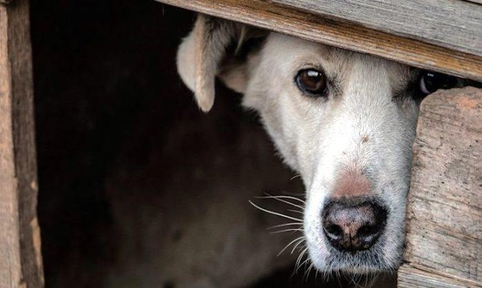 Maltrato animal, la antesala de otras violencias humanas / En la Mira